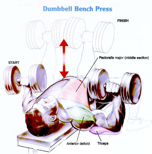 DB Chest Press 5x5 Find A Weight Which You Can Push Fairly Comfortably In The First Three Sets But Gets Hard To Do 5 Reps For Last Two