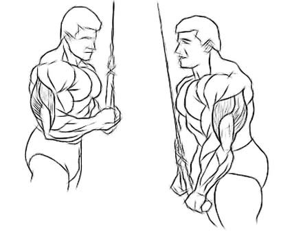 Triceps Cable Press Down Tricep Cable Pull Down 3 Sets